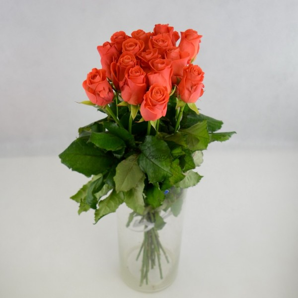 Bouquet of 15 coral roses