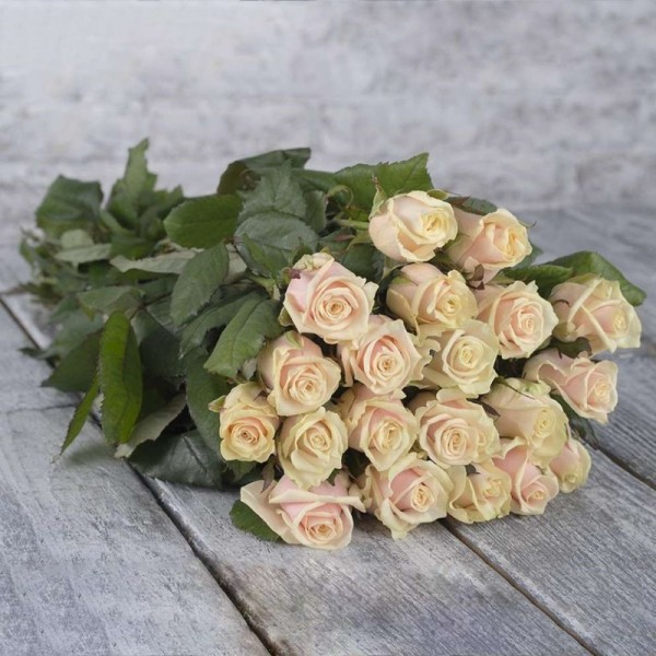 Bouquet of 25 cream roses