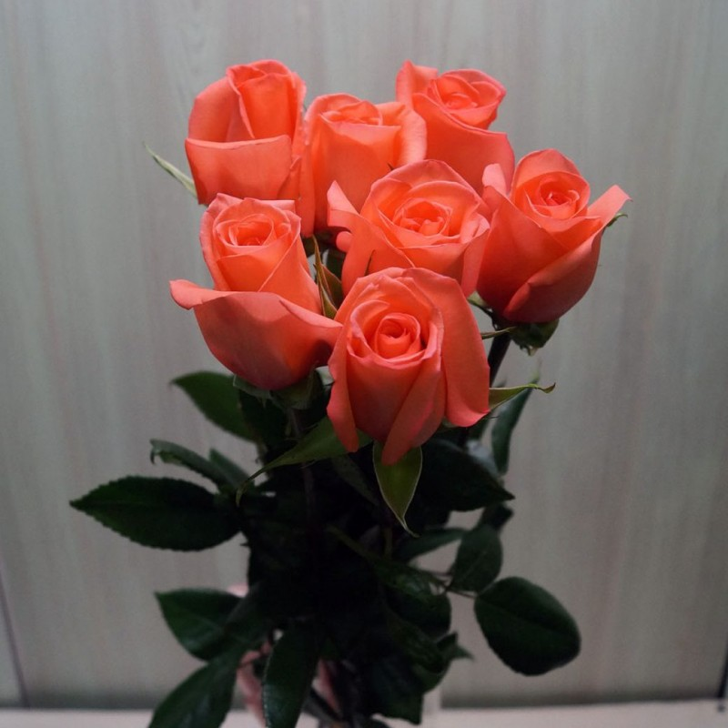 Bouquet of 7 coral roses