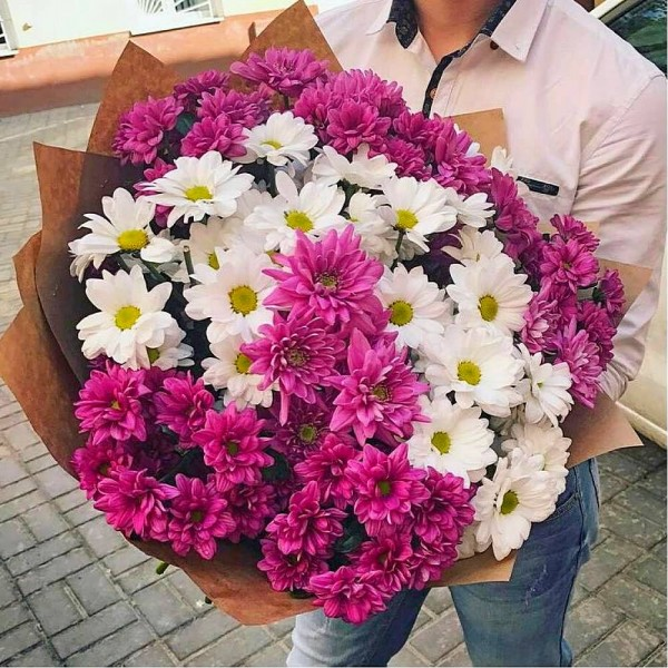 Bouquet of 17 white and pink chrysanthemums