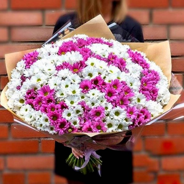 Bouquet of 35 white and pink chrysanthemums